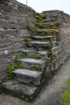 Weeds Growing through Cracks in Stone Stairs