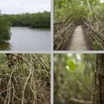 West Lake photographs