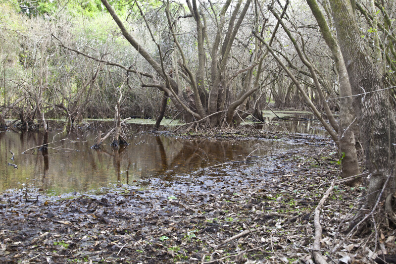 Wet Area with Numerous Fallen Leaves at Myakka River State Park