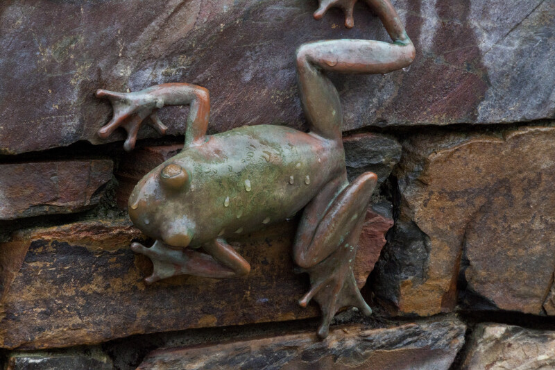 Wet Bronze Tree Frog