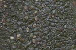 Wet Concrete with Lichen