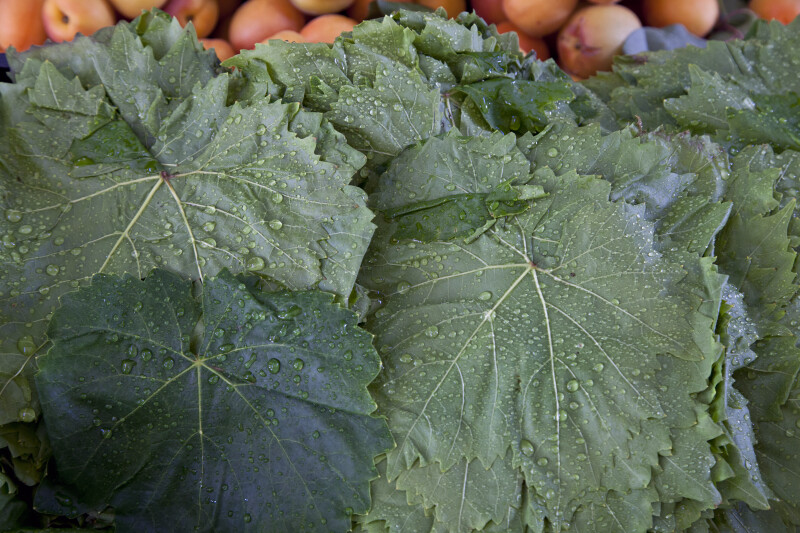 Wet Green Grape Leaves