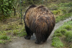 Wet Grizzly