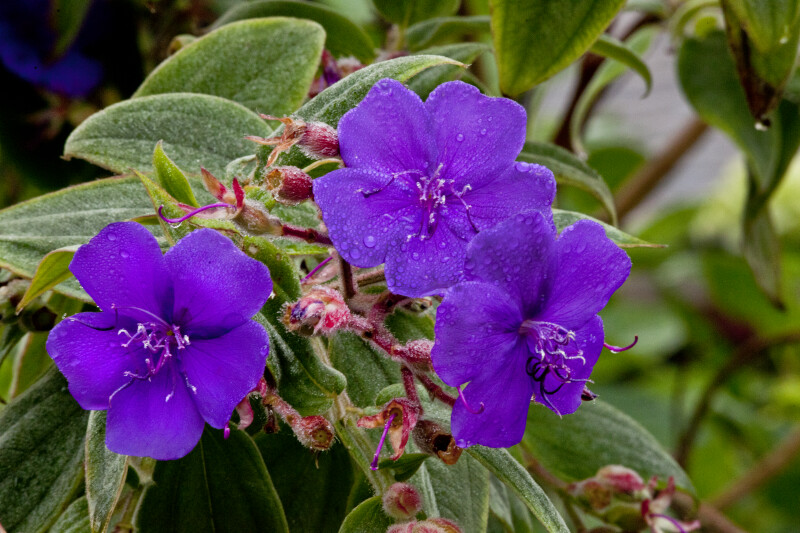 Wet, Purple Flowers