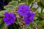 Wet, Purple Flowers