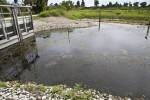 Wetland area under restoration at Circle B Bar Reserve