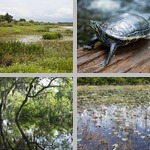 Wetland Habitats photographs