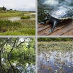 Wetland Habitats photographs