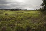 Wetland Plants Overtake Pasture