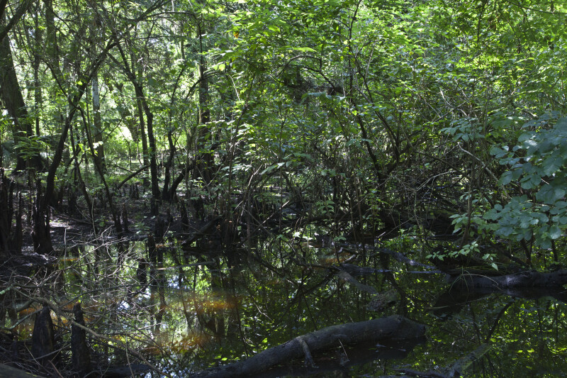 Wetlands Adjacent to the Hillsborough River