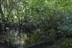 Wetlands Adjacent to the Hillsborough River