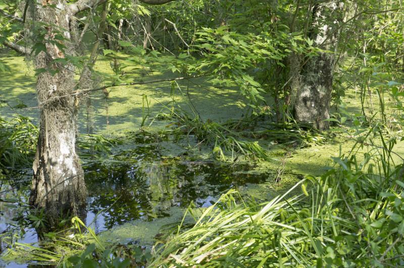 Wetlands at Brooker Creek