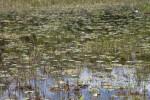 Wetlands at Chinsegut WEA
