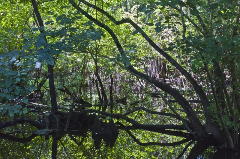 Wetlands near the Hillsborough River