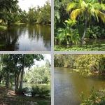 Wetlands photographs