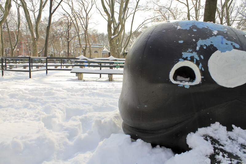 Whale in the Snow