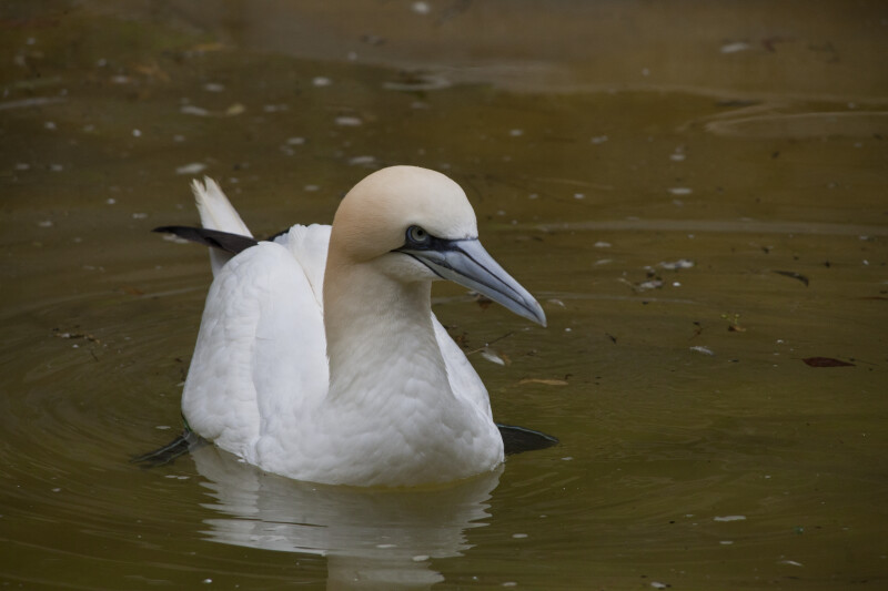 White Bird with Distinctive Beak