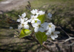 White Flowers with Five Petals