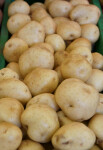 White Potatoes at the Tampa Bay Farmers Market