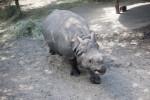 White Rhino from Above