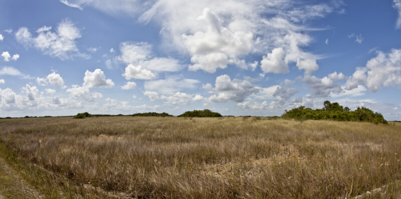 Wide-Angle View of a Sawgrass Field at Shark Valley of Everglades National Park
