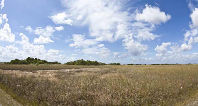 Wide-Angle View of a Sawgrass Field