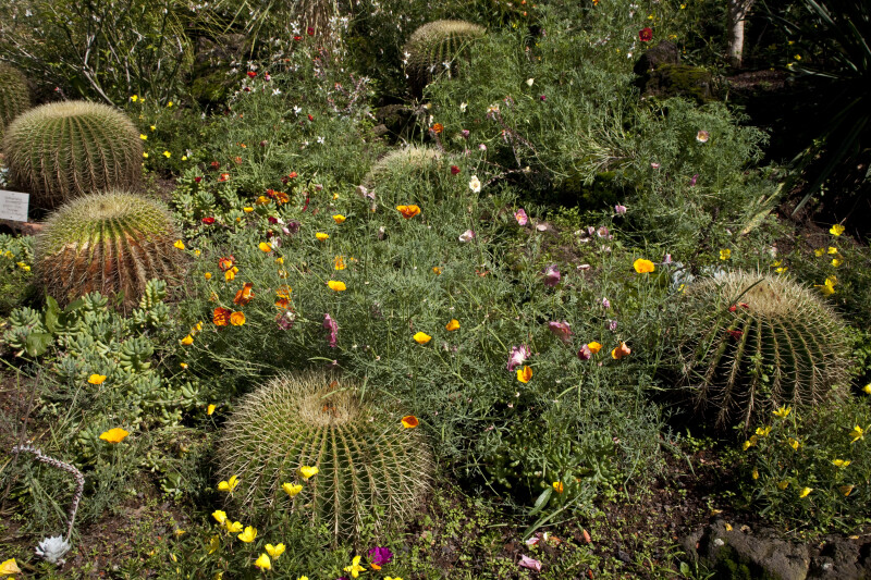 Wildflowers and Cacti