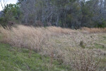Wind Blowing Through Grasses at Colt Creek State Park