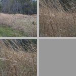 Wind photographs