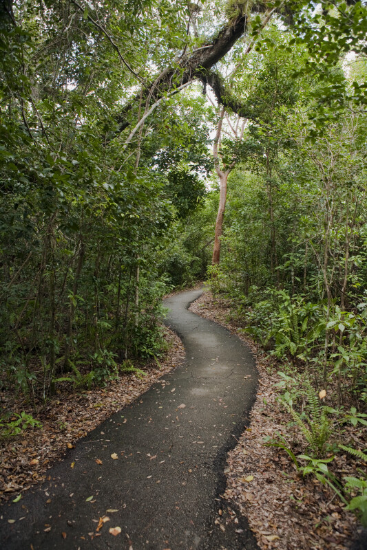Winding Asphalt of the Gumbo Limbo Trail