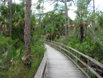 Winding Boardwalk