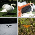 Wings photographs