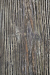 Wood Panel at Myakka River State Park