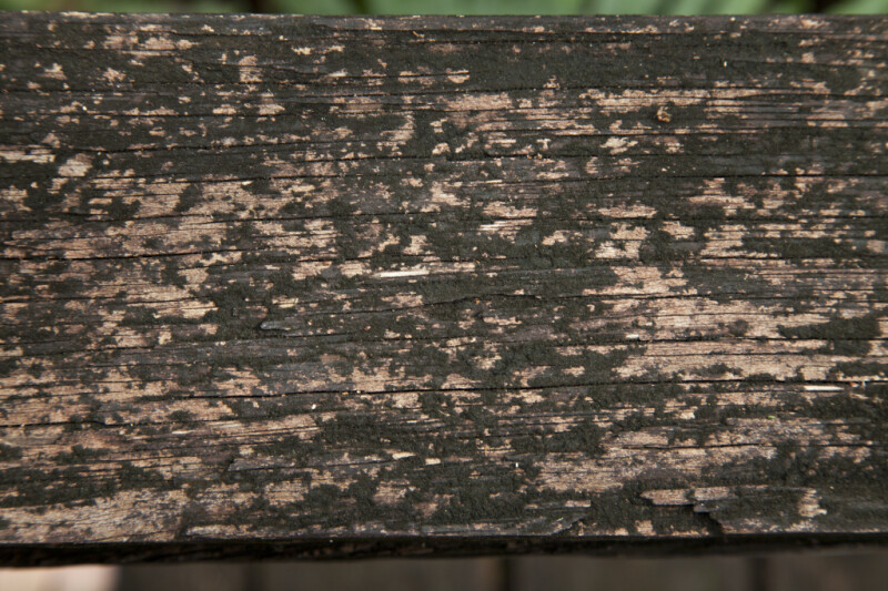 Wood Slat with Light Brown Blotches