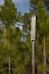 Wooden Bird Feeder Amongst Pine Trees