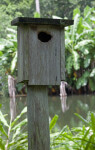 Wooden Birdhouse at the Kanapaha Botanical Gardens