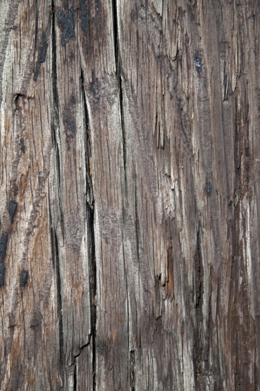 Wooden Plank Close-Up