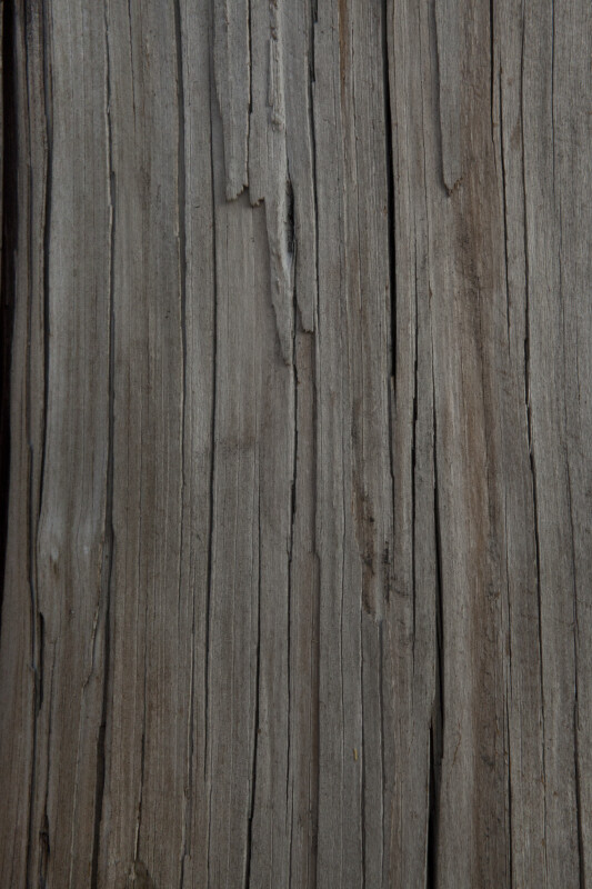 Wooden Utility Pole