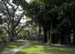 Wray House and Banyan