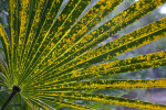 Yellow and Green Palm Frond
