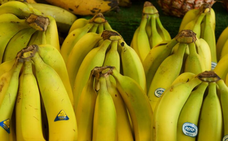 Yellow Bananas at the Tampa Bay Farmers Market