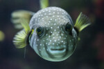 Yellow Fish Eyes