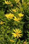 Yellow Flowers at the Rancho Los Alamitos Historic Ranch and Gardens