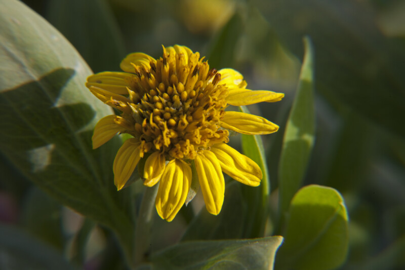 Yellow Flowers Displaying Center and Petals