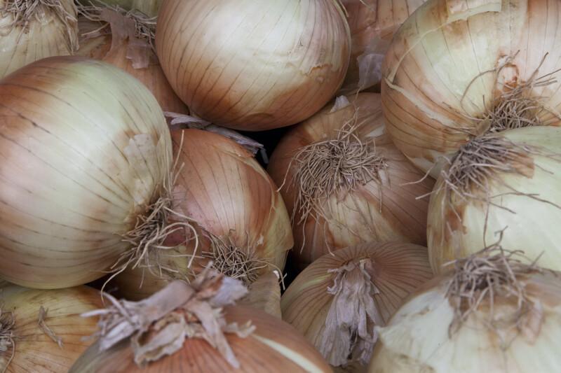 Yellow Onions Close-Up