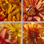 Yellow-Orange photographs