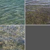 Seagrasses