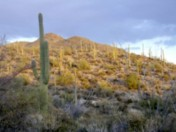 Uplands Monitoring at Saguaro National Park-West, 2009