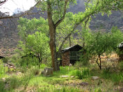 Video - Insider's Look - The Trees of Phantom Ranch