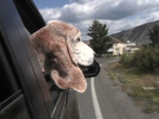 Traveling with Pets in Yellowstone